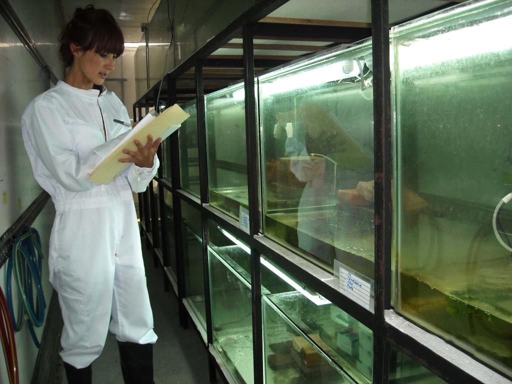 Bolivia's captive breeding facility for frogs