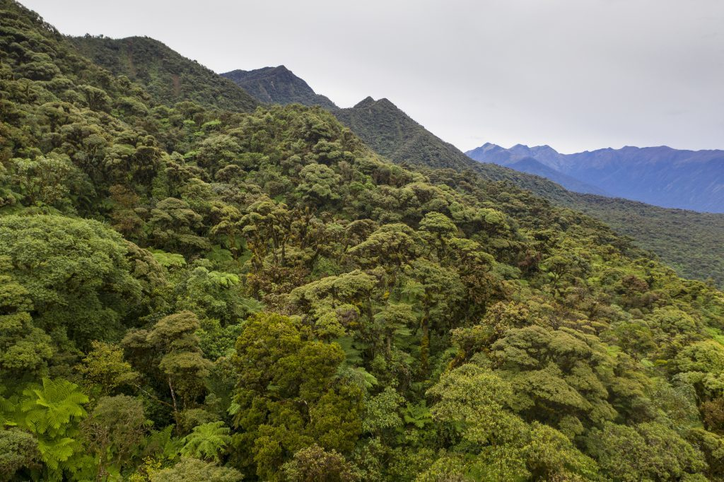 Bolivian cloud forest. (Photo by Robin Moore)
