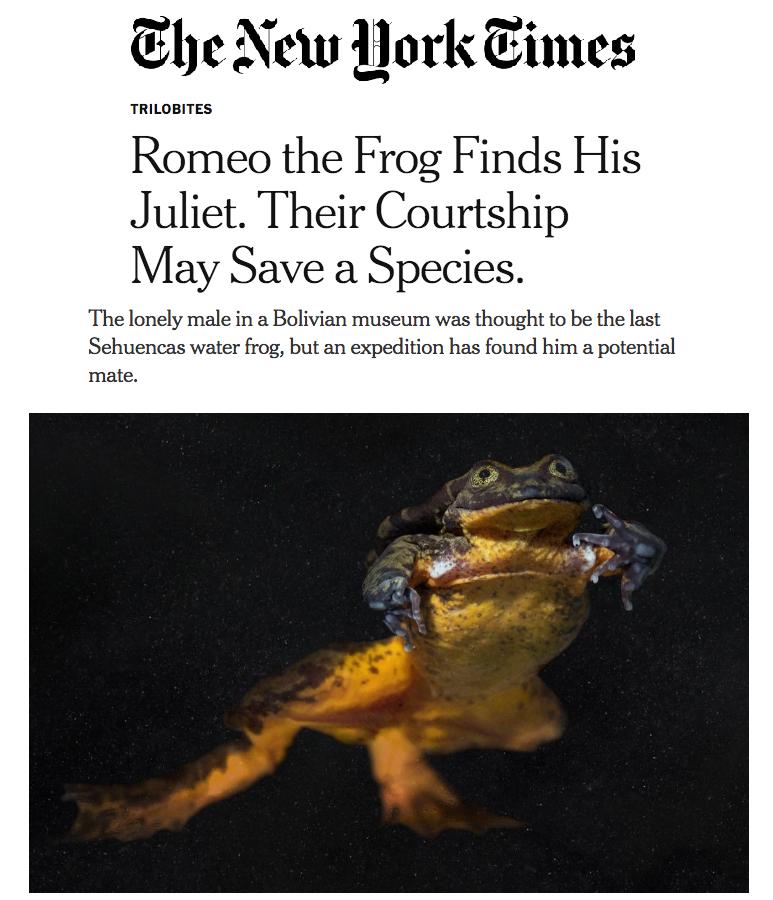 Romeo and Juliet's romance has made headlines around the world.