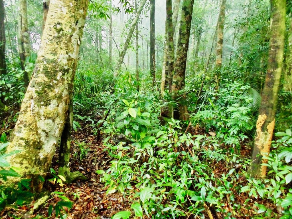 Annamites rainforest, central Vietnam. (Photo by Andrew Tilker)