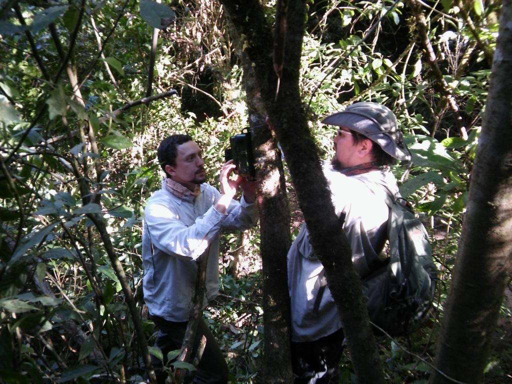 Akmentins and Boullhesen set up recording equipment in the field. (Photo by Martín Boullhesen)