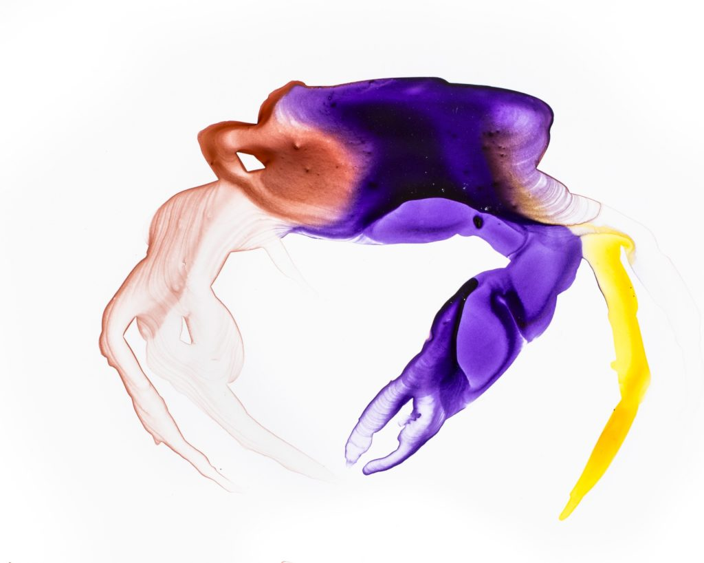 """Sierra Leone Crab is one of The Search for Lost Species' top 25 """"most wanted"""" lost species. (Artwork by Alexis Rockman)"""