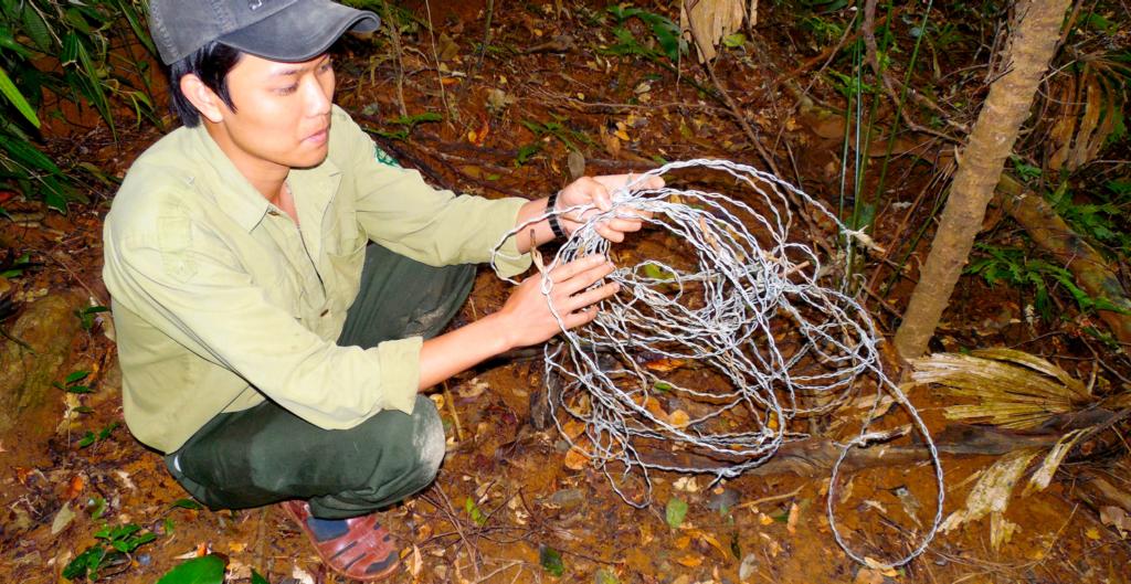 Snares in central Vietnam. (Photo by Andrew Tilker)