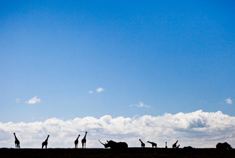 wildlife silhouettes against blue sky