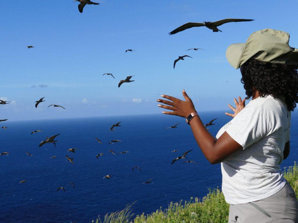 Shanna Challenger, the Redonda Restoration Programme Coordinator, admires the seabirds. (Photo by Mike Appleton, Global Wildlife Conservation)