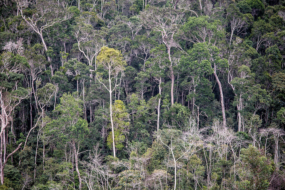 Forests of Madagascar. (Photo by Robin Moore/Global Wildlife Conservation)