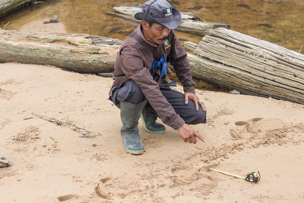 Rhino footprints in Ujung Kulon National Park, Java. (Photo by Robin Moore, Global Wildlife Conservation)