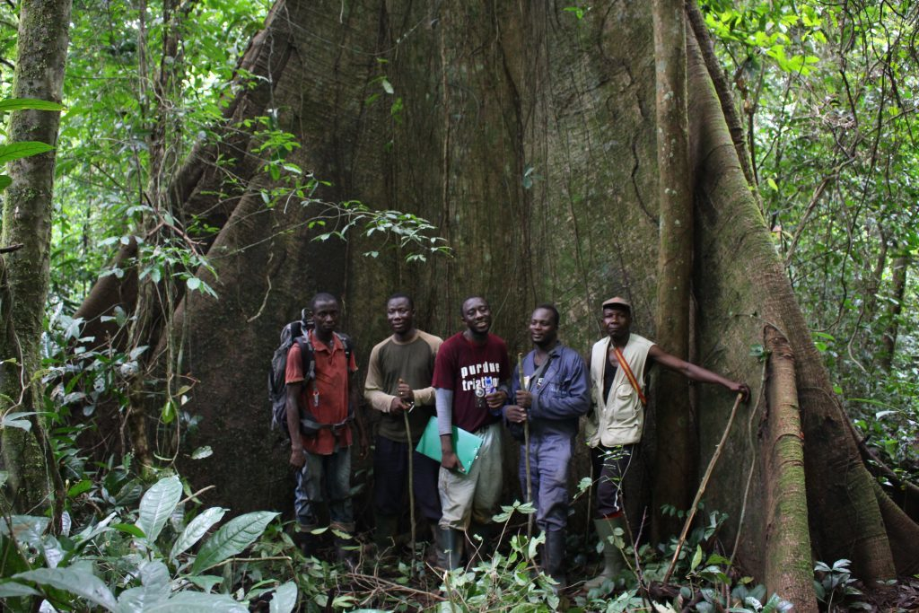 A Rocha's field team in front of a Kapok Tree in Atewa Forest. (Photo by Jeremy Lindsell)