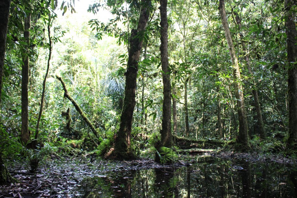 A swamp in the depths of Atewa Forest. (Photo by Jeremy Lindsell)