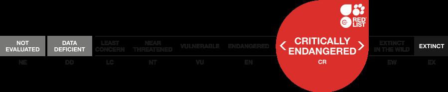 Critically-Endangered-CR