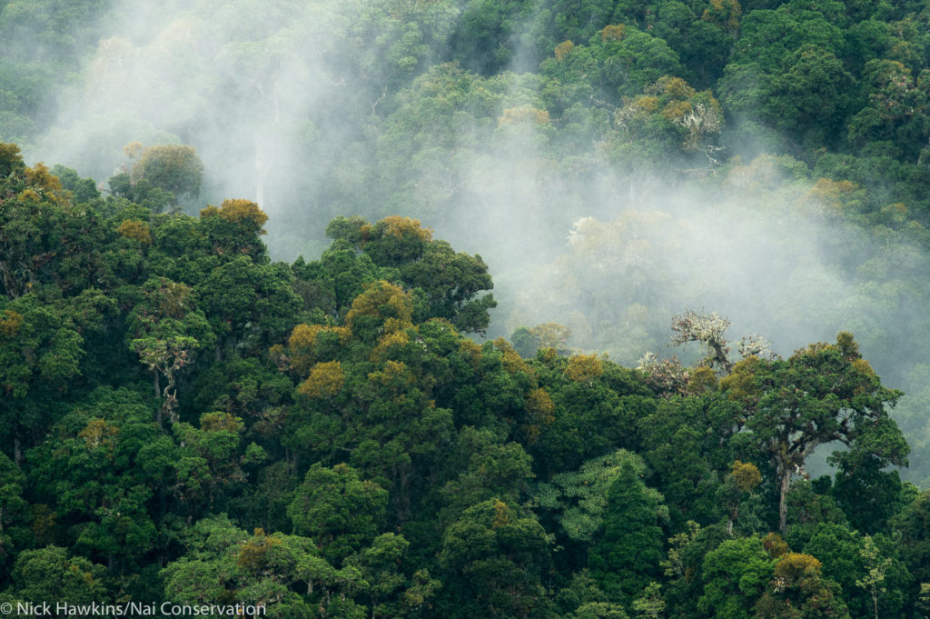 The Talamanca region contains one of Mesoamerica's five biggest forests. (Photo by Nick Hawkins/Nai Conservation)