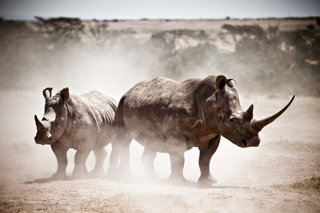 Photo by Robin Moore, Global Wildlife Conservation