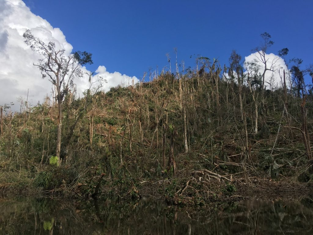 Cucaracha Hill in Indio Maíz is one of the most significantly damaged locations. Very few trees were left unscathed by Hurricane Otto. (Photo by Camilo de Castro Belli)