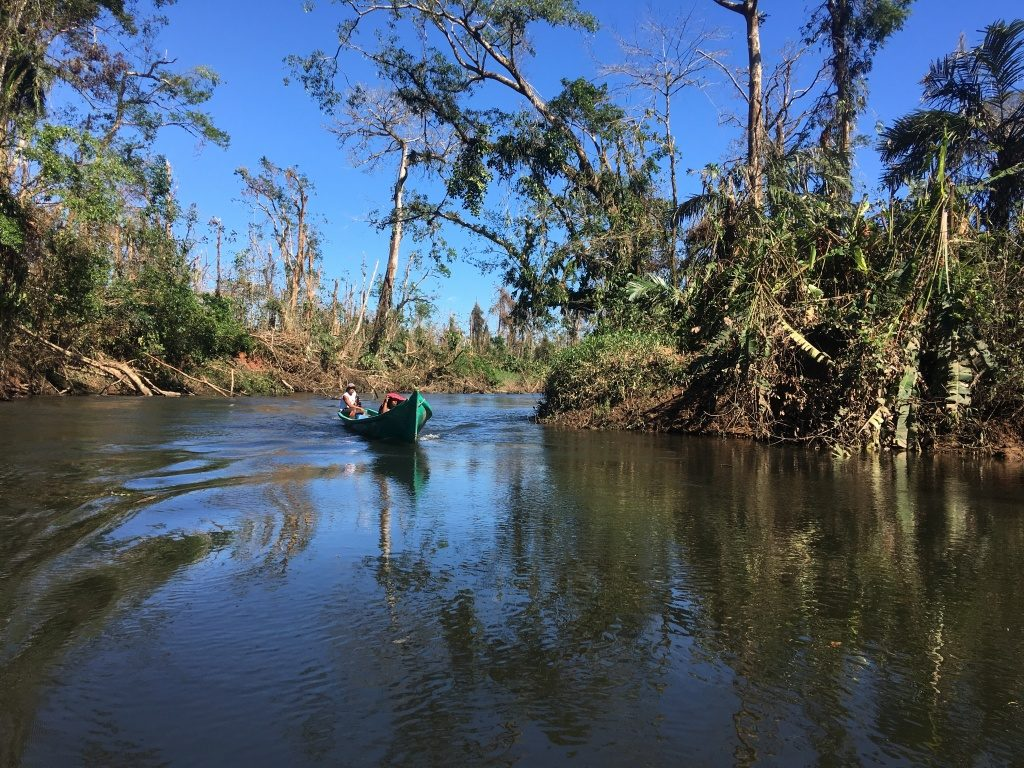 Rama forest ranger Armando John drives his boat along the Indian River with the hurricane-damaged forest surrounding him. (Photo by Camilo de Castro Belli)