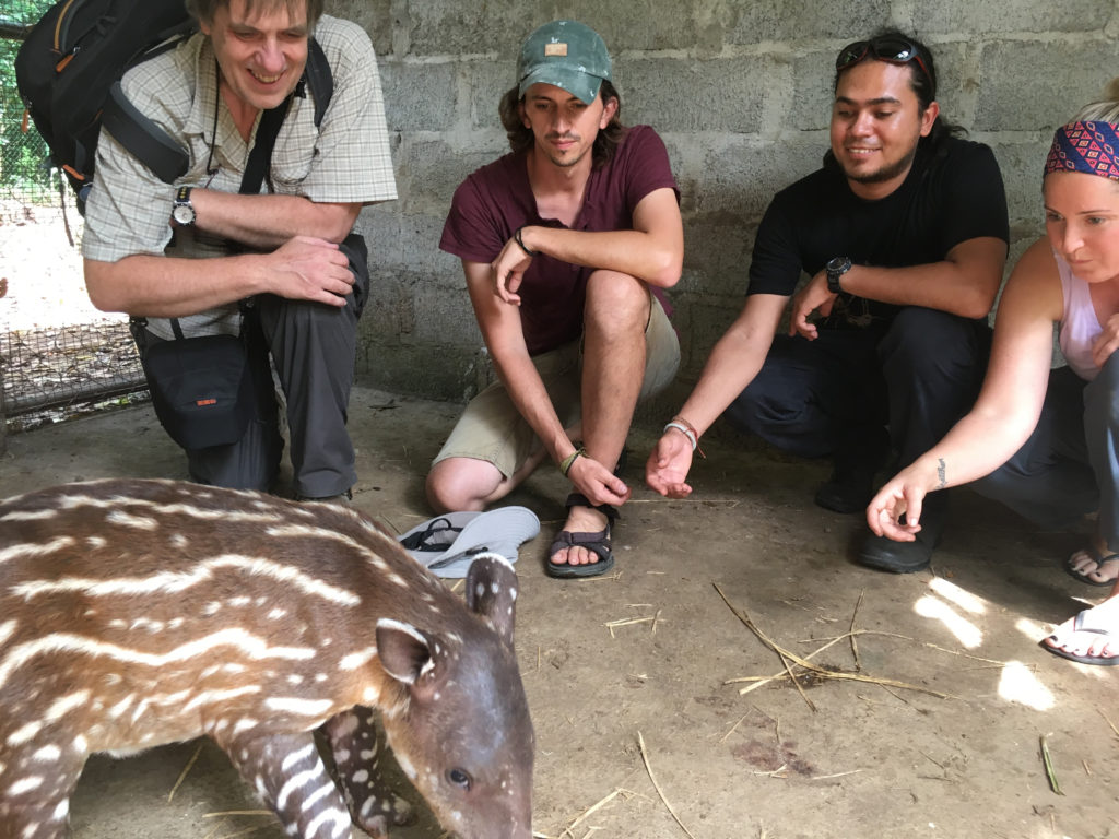 The team moving toward a secure future for Indio Maiz–with a baby Baird's Tapir.