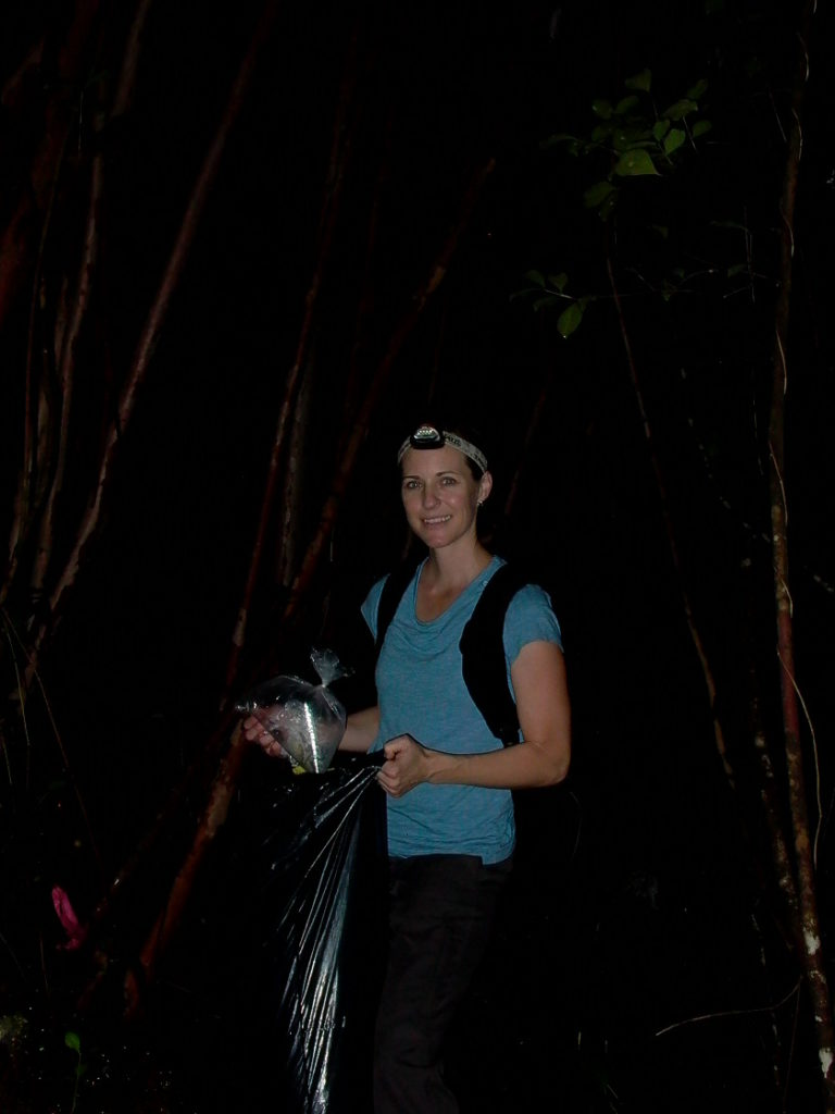 Collecting frogs for chytrid research: a garbage bag full of bags of live frogs. (Photo courtesy of Penny Langhammer)
