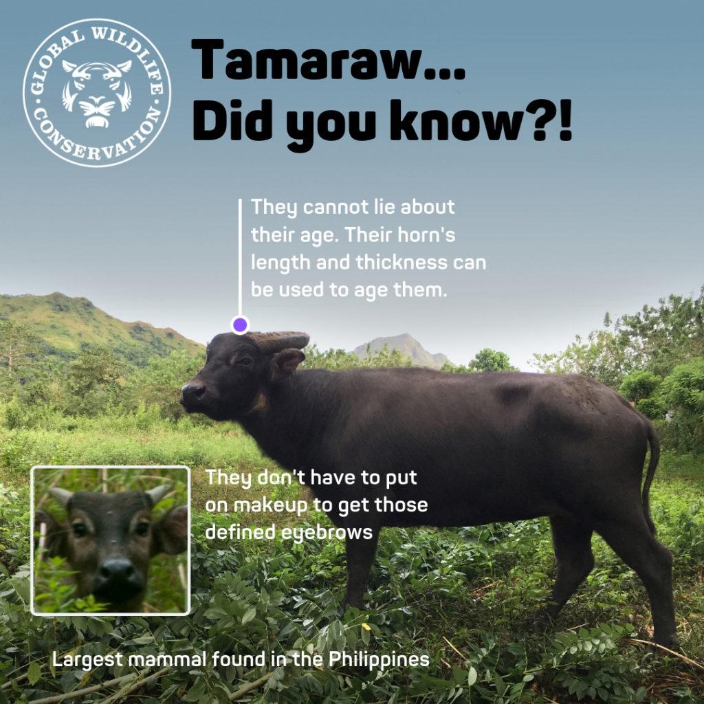 Tamara Did You Know Diagram