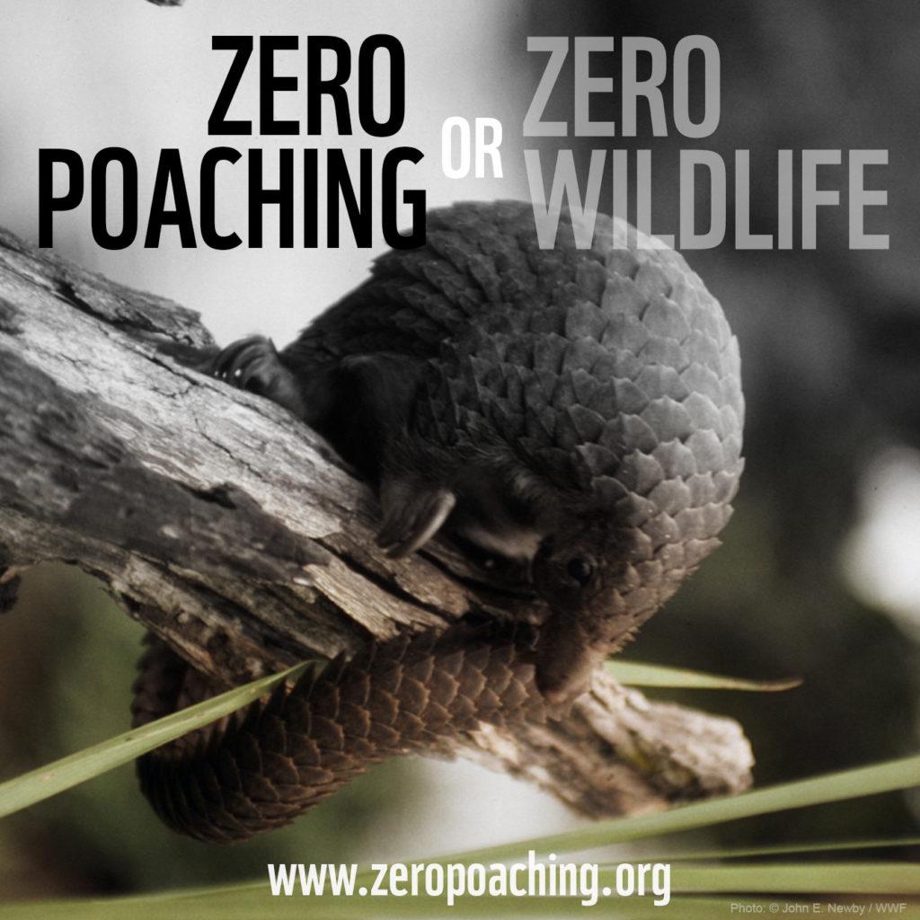 zero poaching