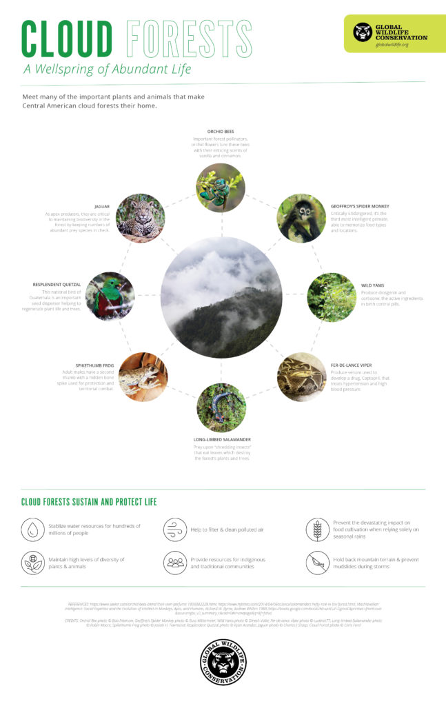 cloud forests-a wellspring of abundant life