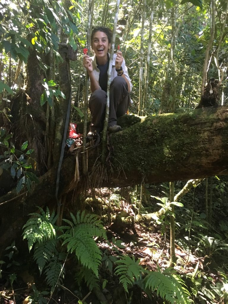 Setting an arboreal camera trap using cherry-flavored lollipops as bait!