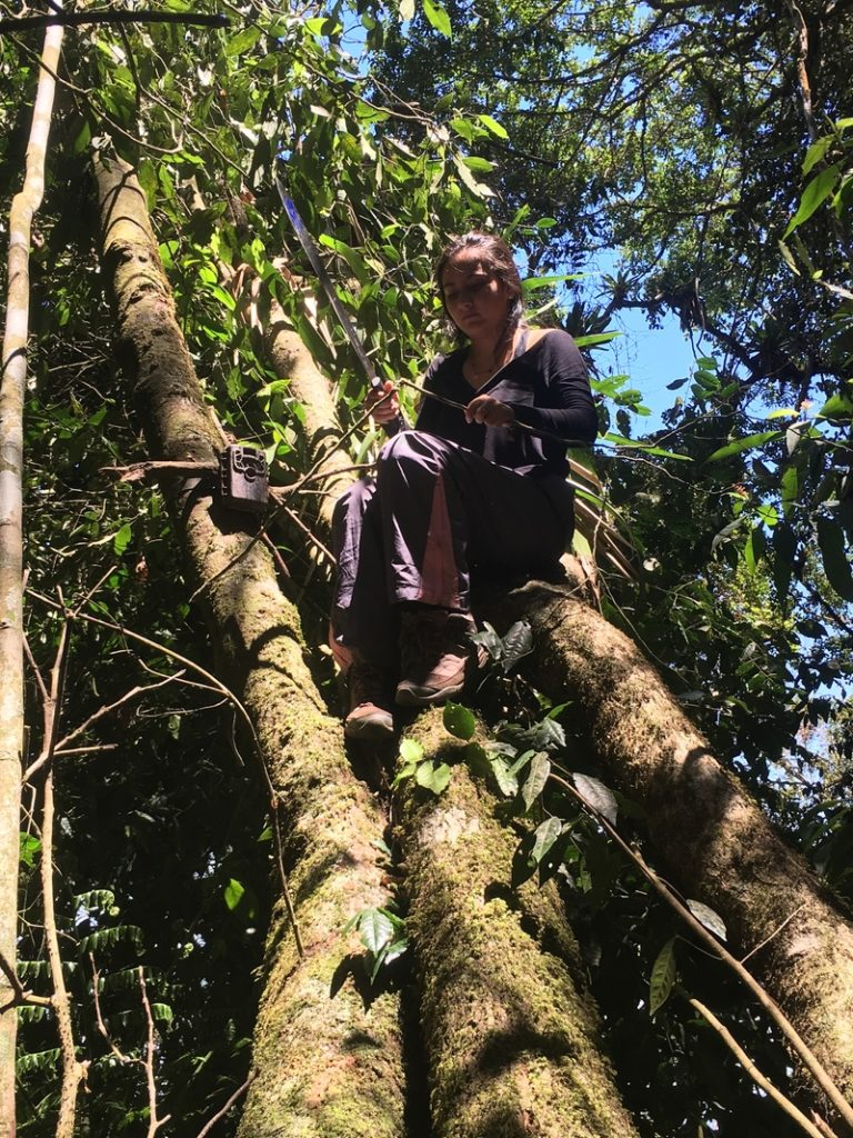 Daniela, my trusty field assistant, setting an arboreal camera trap and using a machete to cut down branches.