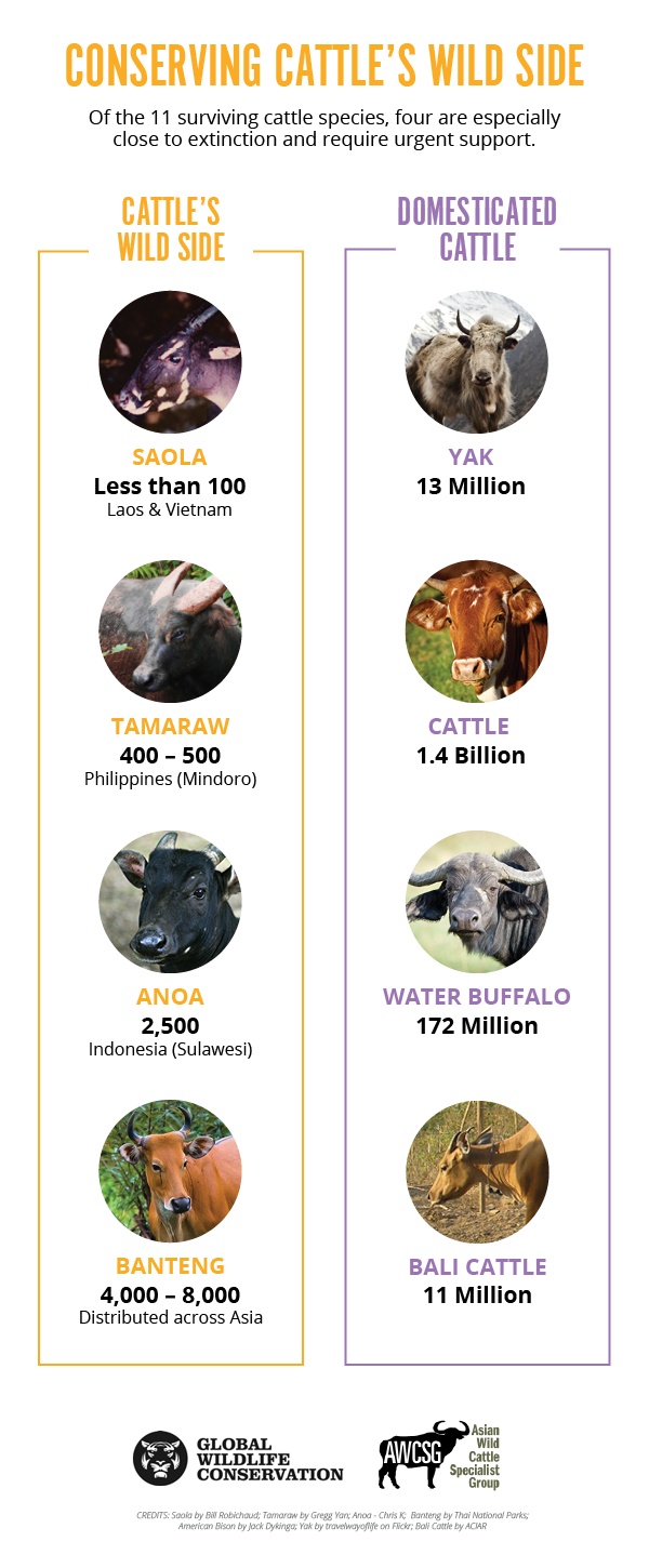 Conserving Cattle's Wild Side diagram