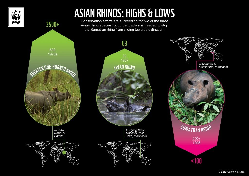 Carrie developed this data visualization during her time at WWF for World Rhino Day, highlighting the three Asian rhino species.