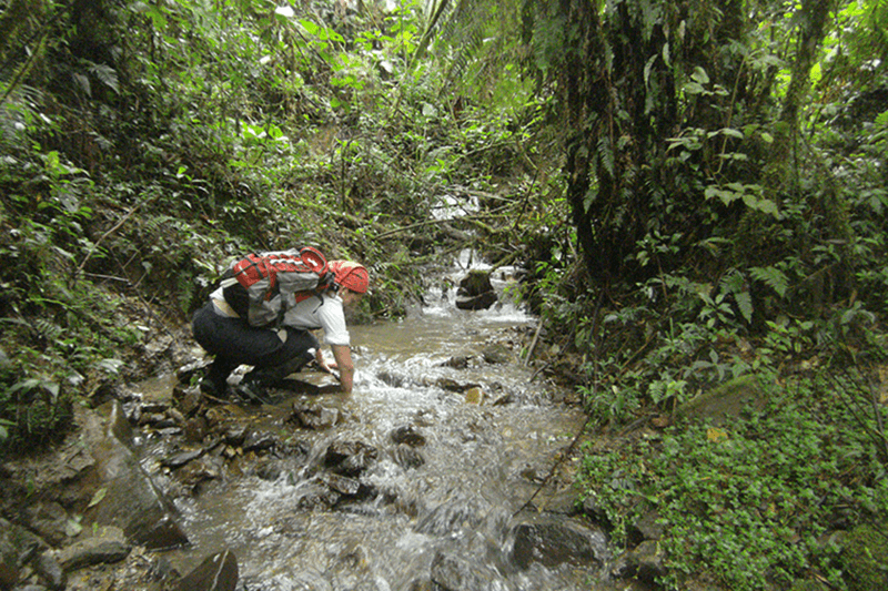 Stephane Knoll, searching for Sehuencas Water Frogs in Bolivia. Photo by: Museo de Historia Natural Alcide d'Orbigny