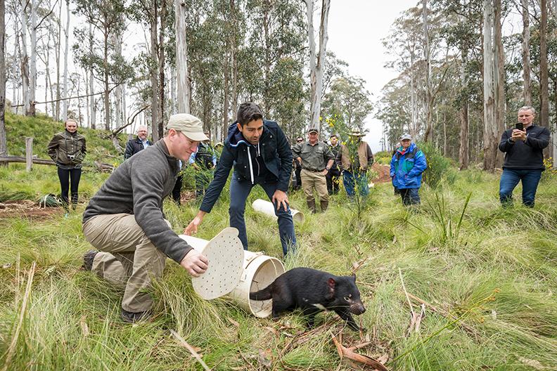release-of-tasmanian-devil
