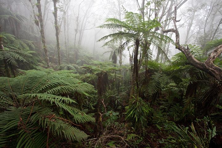 Haiti cloud forest