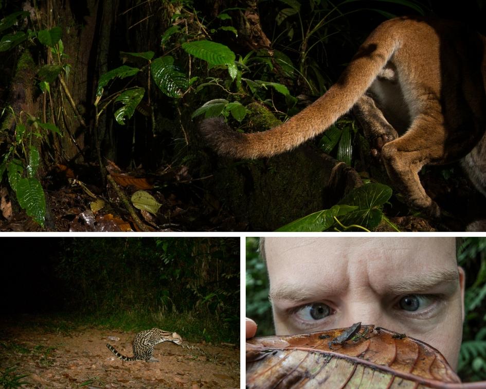 collage of wildlife