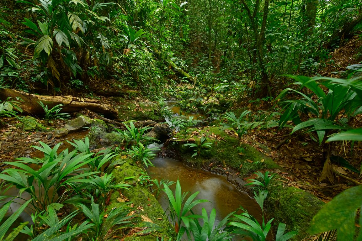 Ciudad del Jaguar area in Moskitia rainforest, Honduras