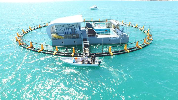 Floating sea pen for vaquitas
