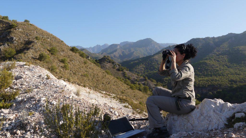 birdwatching in Spain
