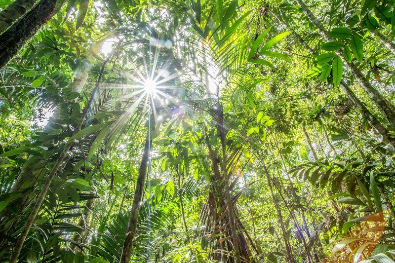 Rainforest of Cocobolo Nature Reserve, Panama