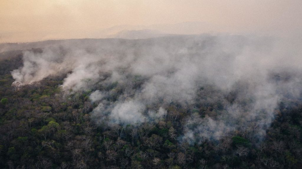 Canopy view of the wildfires