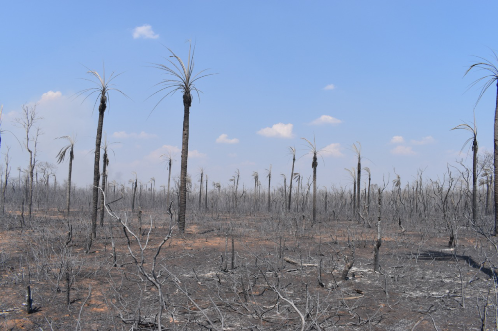 Protected area in Bolivia devastated from the wildfires