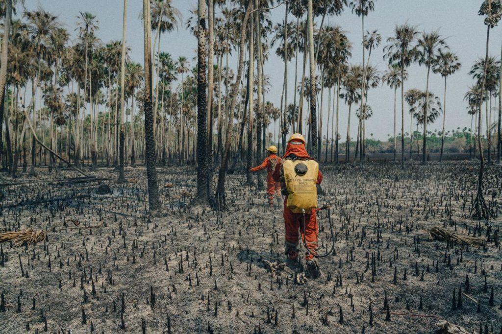 Devastation of wildfire
