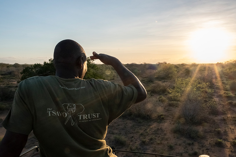 A ranger from Tsavo Trust helps look for Hirola during the few hours of soft light