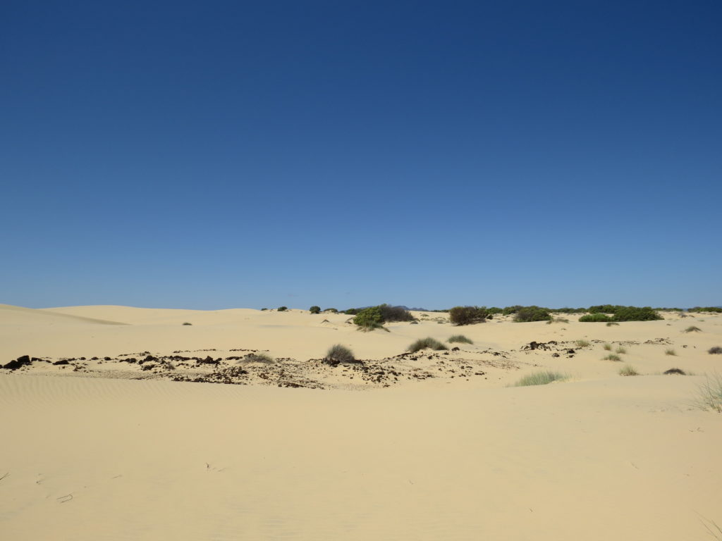 Dune habitat in South Africa where scientists are looking for the Golden Mole.
