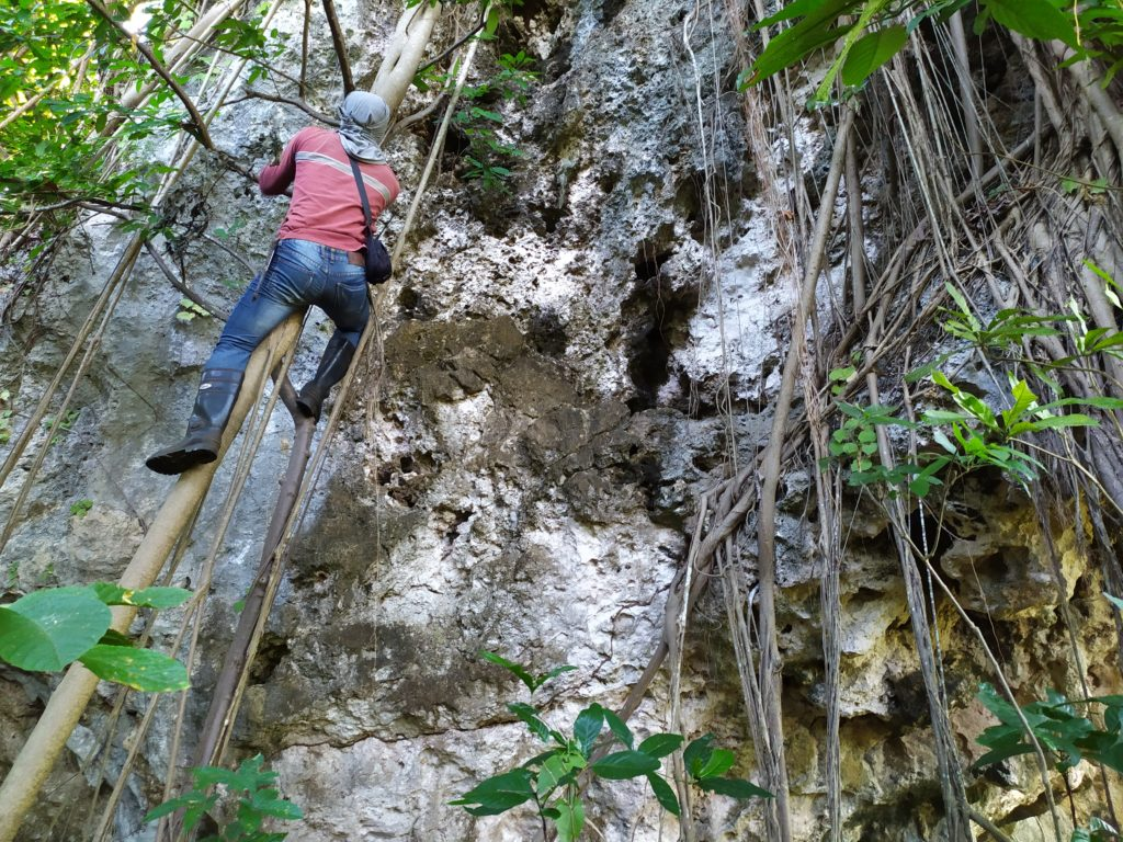 Scaling trees and rocky areas in