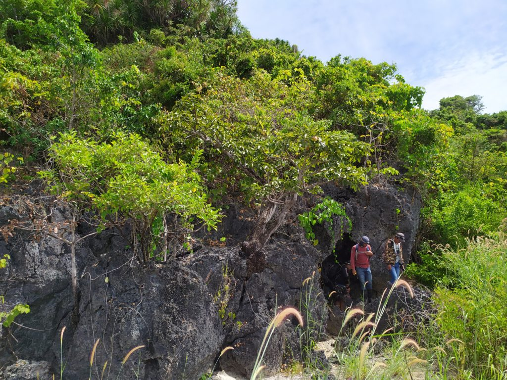 Scientists walking through lowland forests