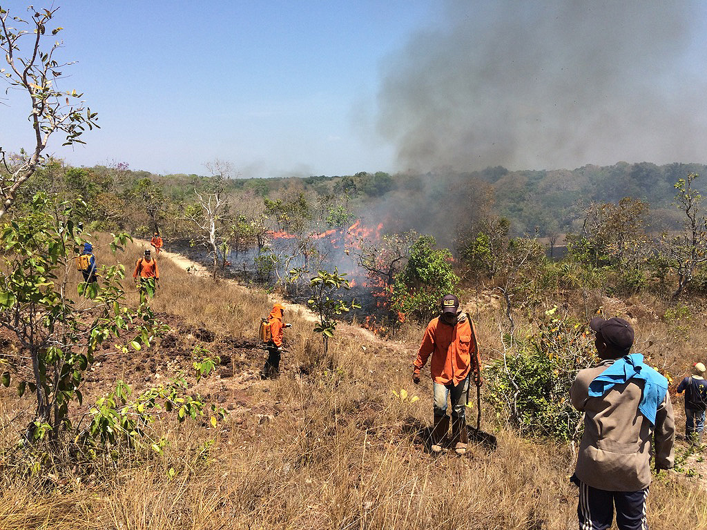 NGO workers putting out fires in dry grassland of the Cerrado.